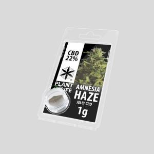CBD Jelly Amnesia Haze 22% 1g